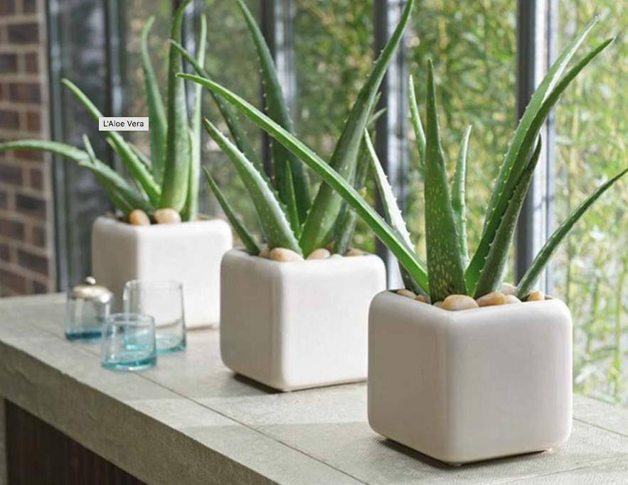Les bienfaits des plantes dans votre chambre